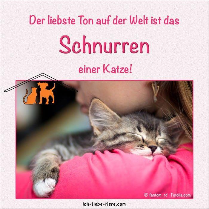 Der liebste Ton auf der Welt - Ich-liebe-Tiere.com