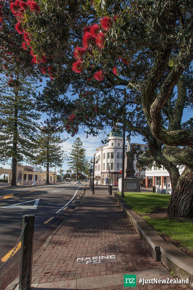 Perfect day in Napier! #nz #newzealand #napier #hawkesbay #artdeco #pohutukawa #holiday #summer #JustNewZealand