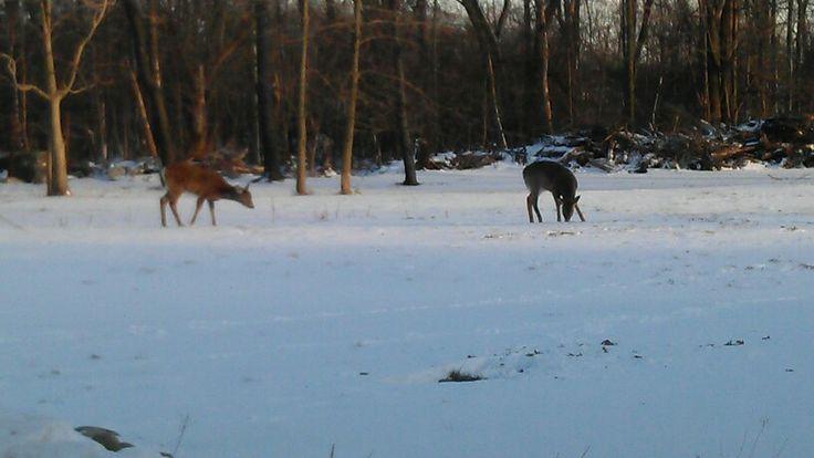 Deers at Michael's work