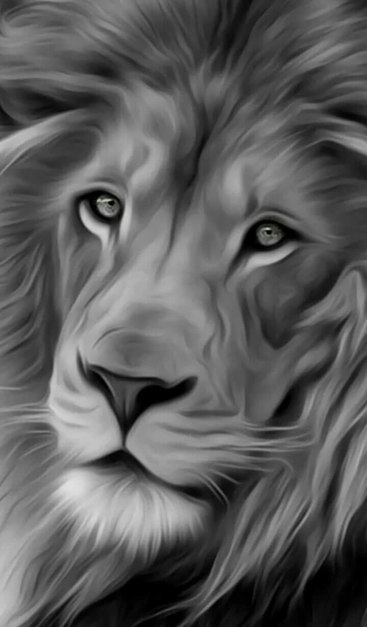 Pin By Nicole On B W Animals Black And White Lion Lion Wallpaper Lion Painting