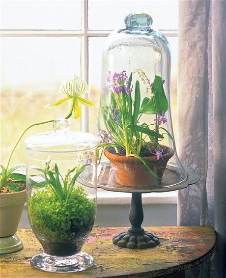 The latest green-fingered trend to arrive from America is crystal clear: mini gardens encased in glass. And at the forefront of this micro movement is Tovah Martin