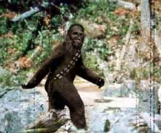 17 best images about bigfoot on pinterest dashboards for Patterson woods
