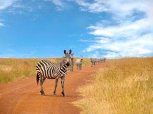 Impressionen einer Kenia Safari.