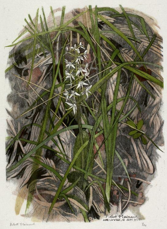 Orchis à deux feuilles