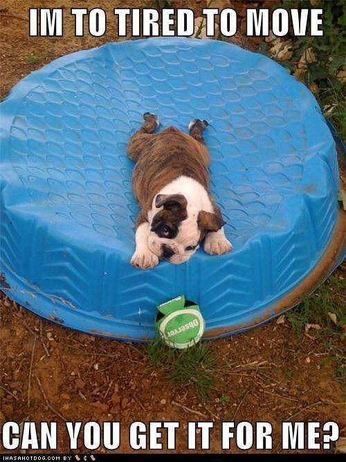Lucky 7 Bulldogs 1449 best images about...
