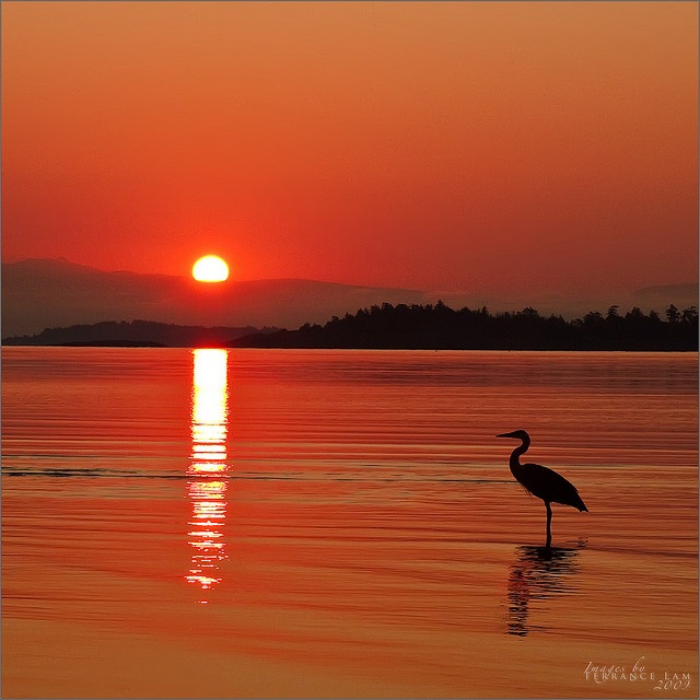 Heron at Sunrise - Rathtrevor Beach, Parksville, Vancouver Island never been here
