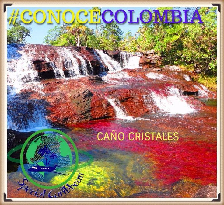"""#CONOCE_COLOMBIA con Special Caribbean ! Hoy te traemos un maravilloso lugar de Colombia, llamado CAÑO CRISTALES o """"Rio de los cinco colores"""" tambien llamado """"El río que se escapo del Paraiso"""". Éste río ha sido catalogado como uno de las más hermosos, sino el más hermoso del mundo. Muchos viajeros, expedicionarios y turistas que han conocido la Sierra de La Macarena, la definen como uno de los sitios más bellos del planeta. Caño Cristales es por su condición, un paraíso de tranquilidad."""