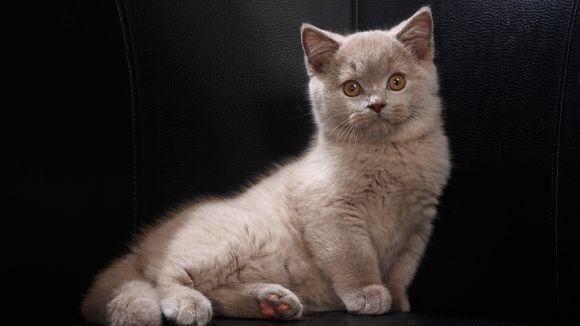 7 Todsünden der Katzenerziehung