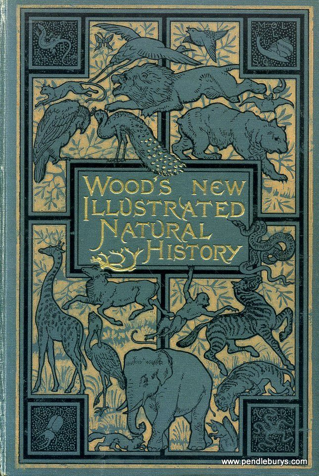 Book Cover Illustration History : Wood s new illustrated natural history rev j g