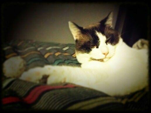 #Goku #cat #sleep