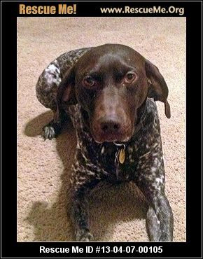 Mick— Nebraska German Shorthaired Pointer Rescue — ADOPTIONS — RescueMe.Org