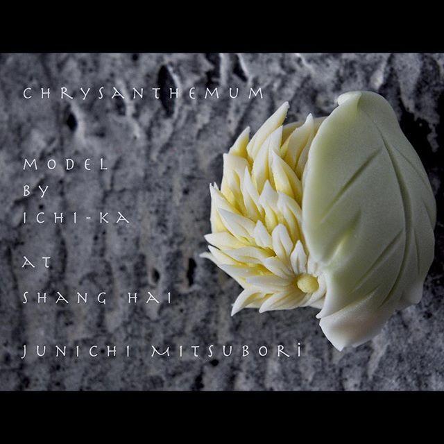 crysanthemum