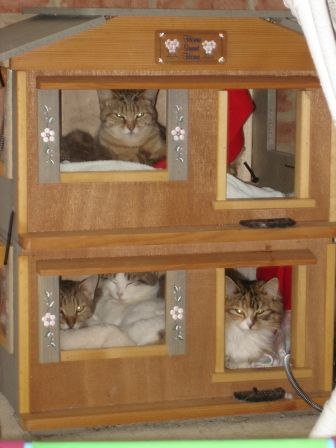Awesome Cat House Indoor Contemporary   Amazing Design Ideas .