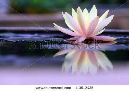 Gratis afbeelding op Pixabay - Lotus Flower, Waterlelie, Water