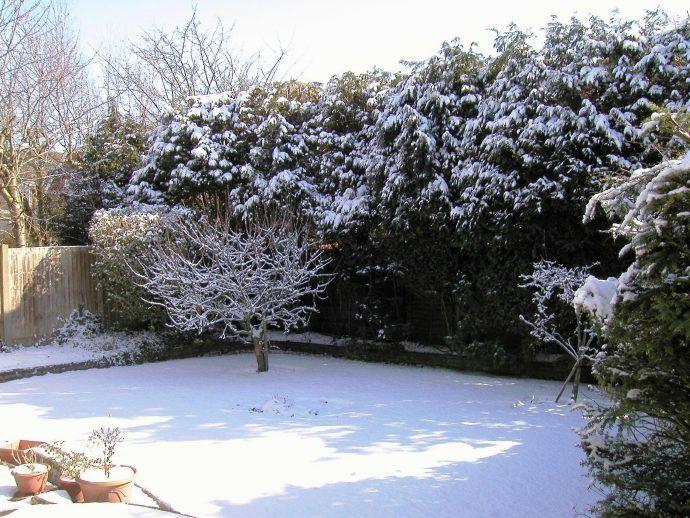 Resultado de imagen para jardines cubiertos de hielo