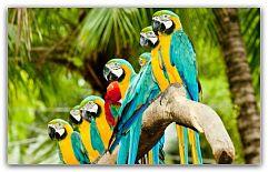 Содержание декоративных птиц в качестве домашних животных набирает всё большую популярность. Среди их многообразия каждый может выбрать питомца согласно своим предпочтениям. Все виды отличается между собой не только внешними данными и способностью выводить уникальные трели ... http://c.cpl1.ru/7kNM