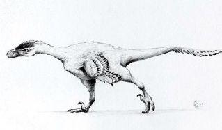 Descubren seis nuevas especies de dinosaurios