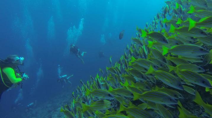 Dykkertur nær Angsana Ihuru, Maldiverne