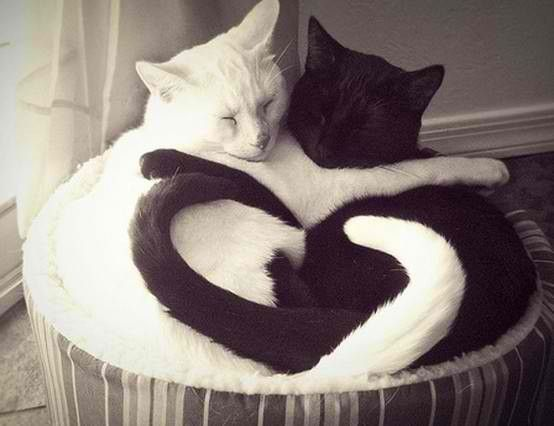 Im in love with these cats!