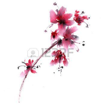 dessin fleur de cerisier: Fleur de Sakura. Aquarelle et encre anillustration dans le style de porcelaine sumi-e. Peinture traditionnelle orientale.