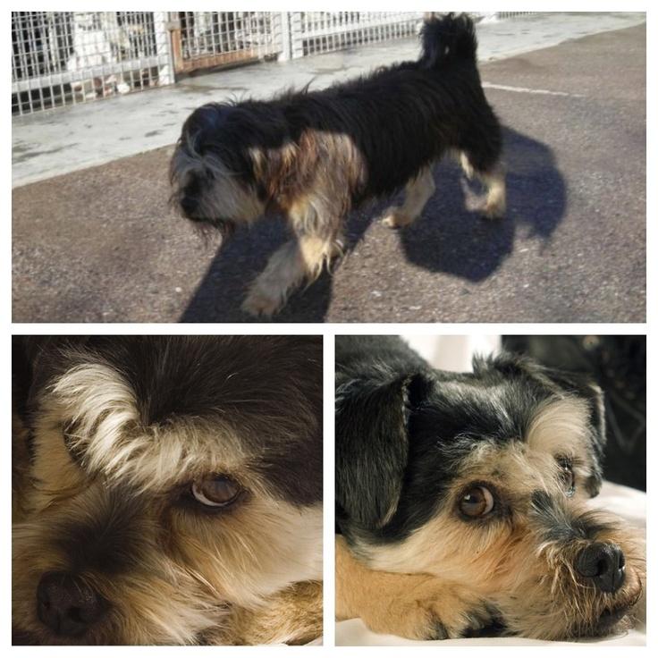 Antes y después #adopta