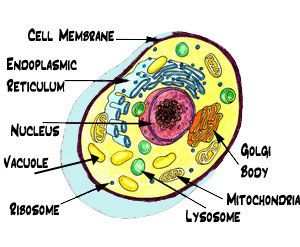 28 best gcse science paper 1 images on pinterest gcse science aqa animal cell ccuart Gallery