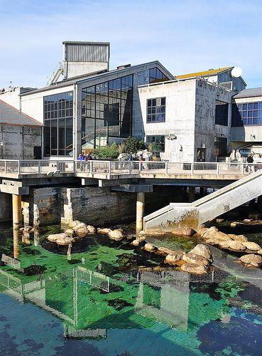 Monterey Bay Aquarium, California.