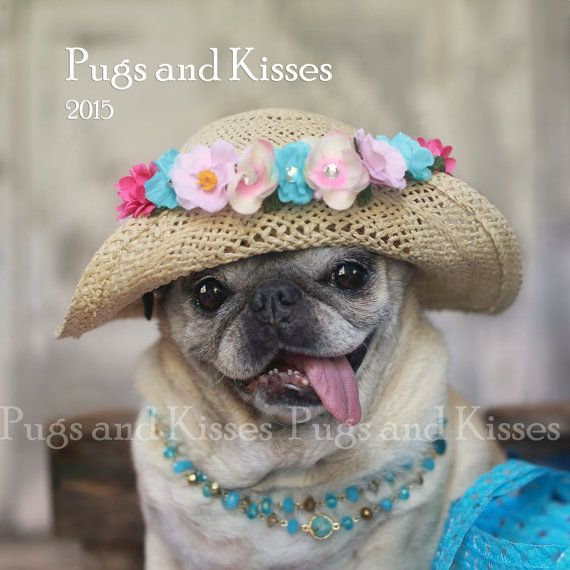 Hey, I found this really awesome Etsy listing at https://www.etsy.com/listing/208700392/2015-pug-calendar-by-pugs-and-kisses @cfling11