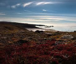 Debido a la dureza del clima de la tundra ártica, las regiones de este tipo han visto poca actividad humana, a pesar de que a veces son ricos en recursos naturales como el petróleo y el uranio.