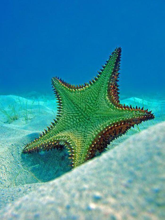 fond marin, belle étoile de mer dans les fonds marins
