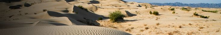 Sand dunes dominate the landscape in the North Algodones Dunes Wilderness Area.