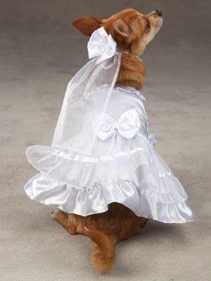 71 besten Dog fashion Bilder auf Pinterest | Hunde, Hundemode und ...