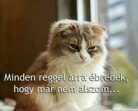 Cuki cica