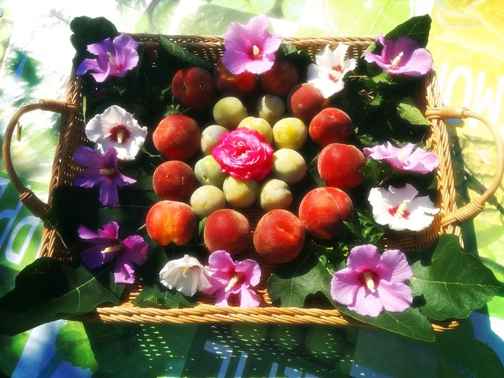 Cosa c'è di meglio di un bel cestino di frutta e fiori per dare il buon giorno ai nostri amici del Belgio, che sono ospiti alla Meridiana !   Le nostre nuove offerte: Appartamento bilocale dal 18.07 al 25.07 a soli € 439 !  Appartamento bilocale dal 25.07 al 01.08 a soli € 439 !  Tel: 338 3641307 Web: www.agriturismolameridiana.it Mail: info@agriturismolameridiana.it