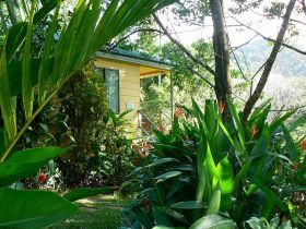 Daintree Valley Haven, www.OzeHols.com.au/5120 for you to explore the Daintree National Park rainforest area during holidays. This bed and breakfast accommodation will offer you the memorable holidays you have been looking for. #Daintree #QLDHolidays #VisitDaintree @OzeHols - Holiday Accommodation