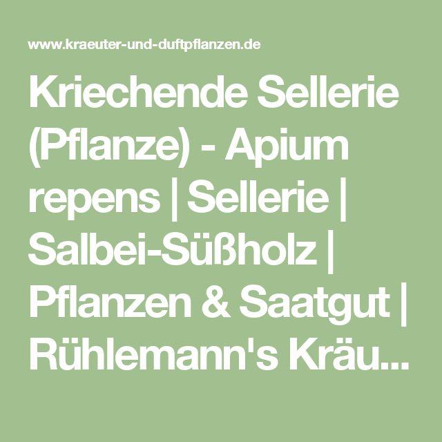 Kriechende Sellerie (Pflanze) - Apium repens | Sellerie | Salbei-Süßholz | Pflanzen & Saatgut | Rühlemann's Kräuter und Duftpflanzen