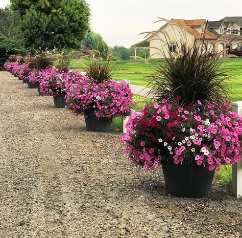 Purple And White Container Flowers