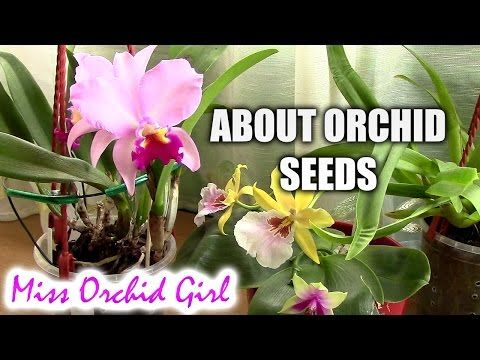 Orchid seeds - What you need to know - Casual Sundays - YouTube