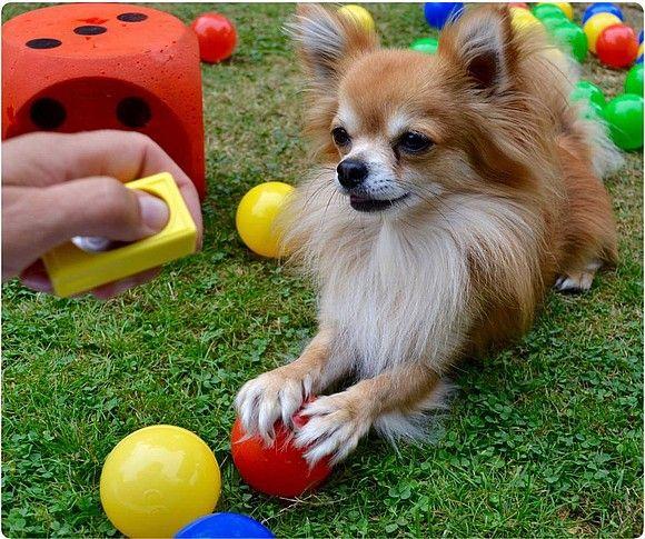 Easy Dogs / Clickertraining-Basics – der Onlinekurs für's Clickertraining von Corinna Lenz, Nicola Barke
