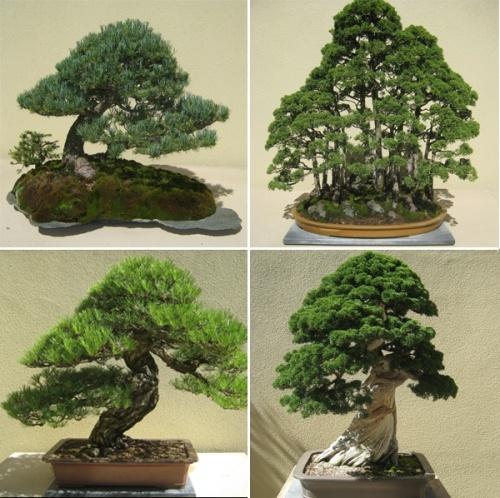 The Weyerhaeuser Pacific Rim bonsai Collection