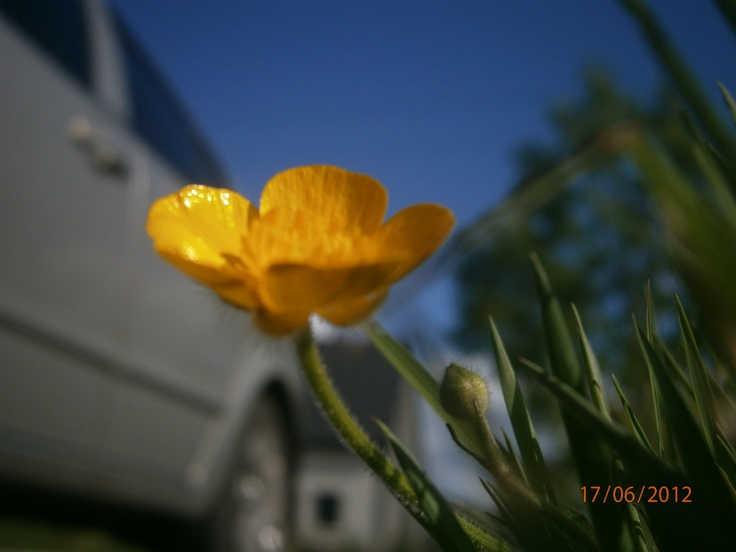 day 6 - from a low angle - a flower at my house and our car is blurred in the back round