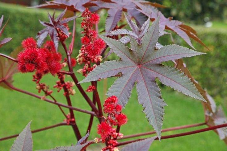 Die 10 Gefahrlichsten Giftpflanzen Im Garten Giftpflanzen Pflanzen Und Essbare Pflanzen