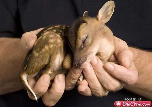 Baby deer WOW!