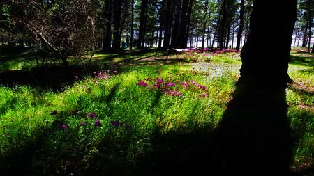 Shadows of the Forest Photo by Lisa O'Sullivan -- National Geographic Your Shot