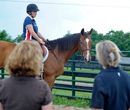 17 best ideas about Horse Sales – Horse Sales Contract