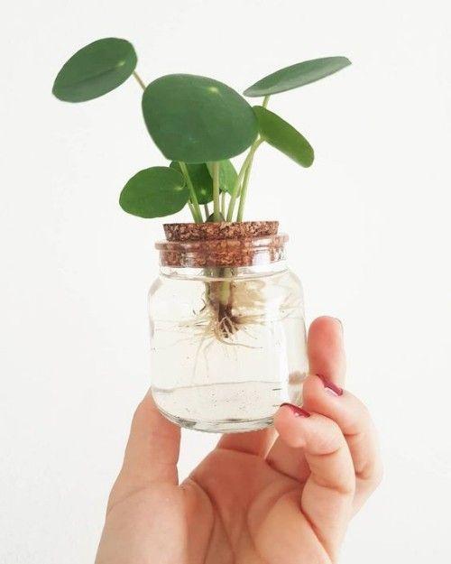 Die neue Trendpflanze: Pilea peperomioides – Yeah Handmade: DIY Blog über Deko, Geschenke, Stricken & Co
