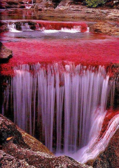 "Cano Cristales River, Northern Colombia - ""The River of Five Colors"" or ""The Liquid Rainbow"", and is even referred to as the most beautiful river in the world due to its striking colors. The river appears as many colors, including as yellow, green, blue, black, and most of all, the red of the Macarenia clavigera (Podostemaceae) at the bottom of the river."