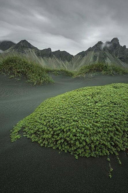 Iceland. Doesn't it look as of giant trolls could just sit up with those lumps of grasses and foliage being the backs?