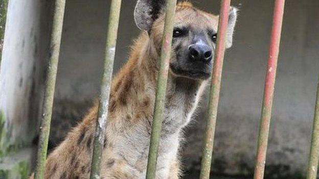 Somalia - Where hyenas are used to treat mental illness.   This must be the definition of insanity.
