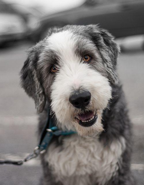 Les 236 meilleures images du tableau Mon chien sur